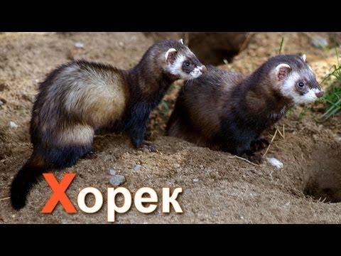 Лунтик и его друзья смотреть новые серии онлайн на