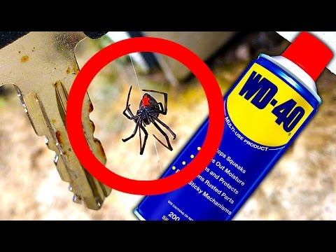 Deadly Spider Keys Of Death WD40 Spider Control