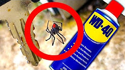 Deadly Spider Controls Testing WD40 Spider Method