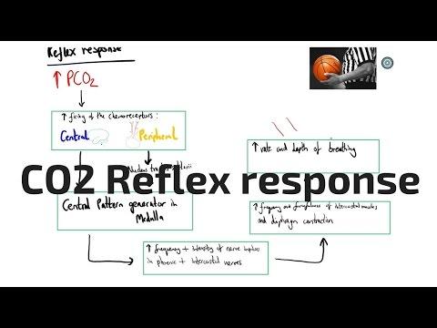 CO2 Reflex response