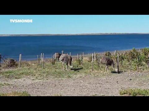 Coronavirus en Argentine: à l'heure du confinement, la vie quotidienne inchangée en Patagonie
