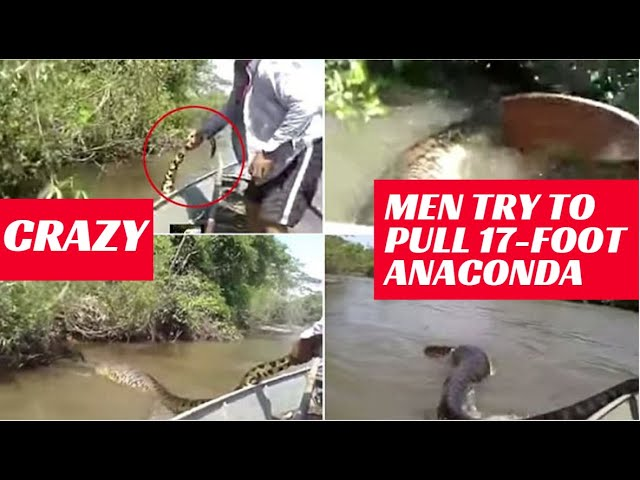 Men Try To Pull 17-Foot Anaconda From Water | Shocking Video Is Viral Again | 9 News HD