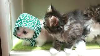 Just look how cute they are! 😘💟- Extremely FUNNY CAT VIDEOS compilation