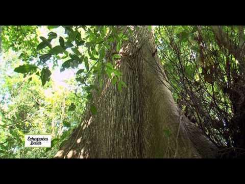 Costa Rica : «Pura Vida !» - Echappées belles