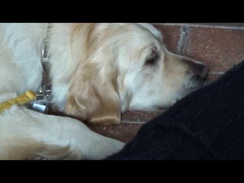 Day 203 - Visiting Rochester Cathedral & Pet Therapy Afternoon