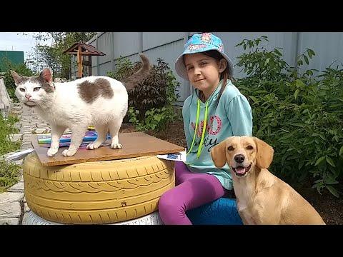 Лиза собирает Троллей, собака Тафи выполняет Команды - Кто лучше справится ?