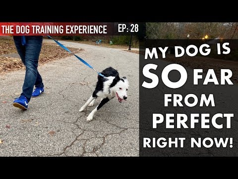 Watch What I Train My Dog On a Daily Basis! Why Isn't She Trained Yet?