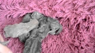 Дневник Котят. День 1. Кошка родила!