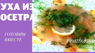 Уха из осетра. Рецепт ухи из осетра пошагово. Как приготовить уху ВКУСНО И БЫСТРО © Irina Zhukova