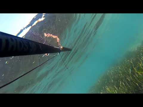 Nisan 2018 altınoluk zıpkınla balık avı KEFAL