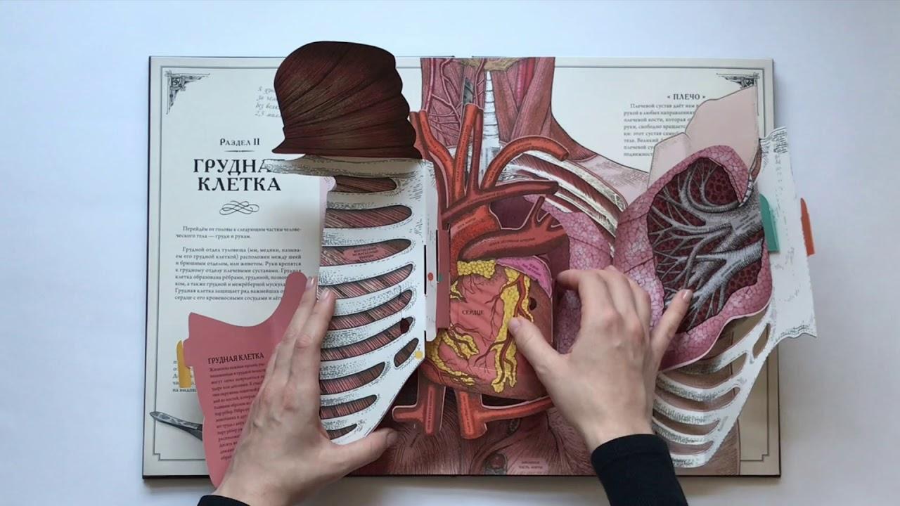 Интерактивная книга-панорама «Тело человека»