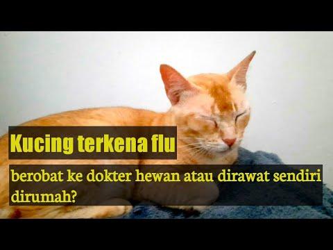 kucing-terkena-flu,-berobat-ke-dokter-hewan-atau-dirawat-sendiri-di-rumah??//obat-flu-kucing