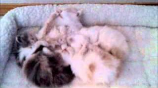 ziakatz sleepy kittens of new mexico