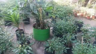 Video Berkebun di lantai 3 download MP3, 3GP, MP4, WEBM, AVI, FLV Juni 2018