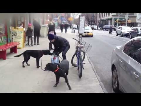 2 Dogs in NYC.