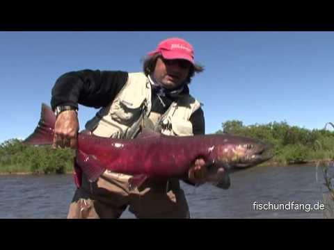 Lachs: Fliegenfischen In Alaska