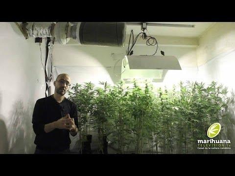 Marihuana Television News 18