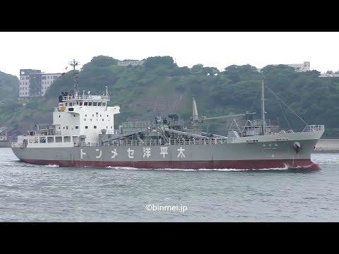 海光丸 - アジアパシフィックマリン セメント運搬船 / KAIKO MARU - Asia Pacific Marine cement carrier