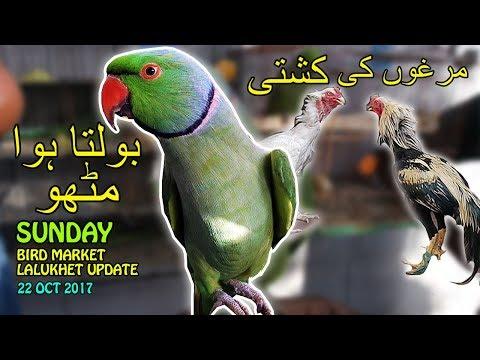 talking-parrots-|-fighting-roosters-|-bird-market-lalukhet-karachi-|-video-in-urdu/hindi