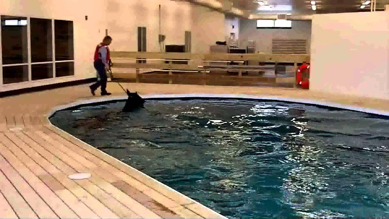 equine swimming pool demo youtube