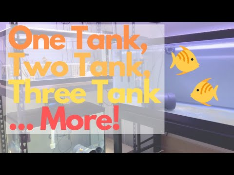 Five Tanks Is Too Many!