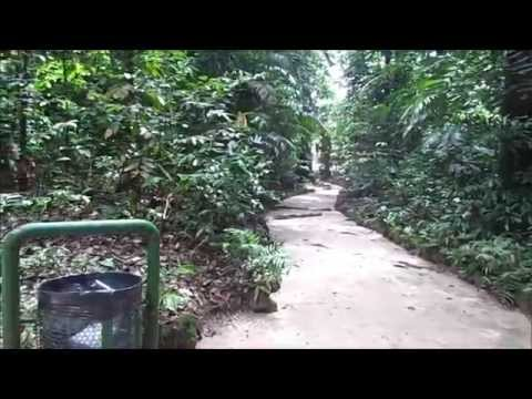 O Jardim Botânico da Amazônia