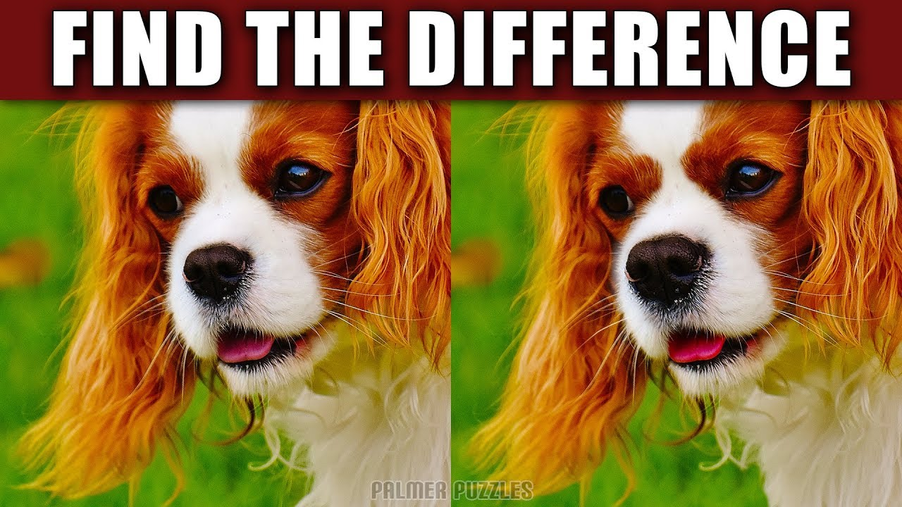 Find The Difference Puppies - Dogs Photo Puzzle - Spot The Difference Puppy