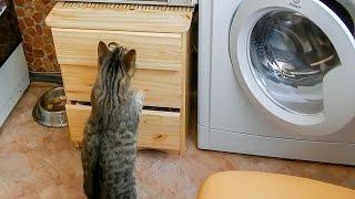 Мой кот идиот достанет все 2/Смешные коты 2015/ Funny cats 2015/