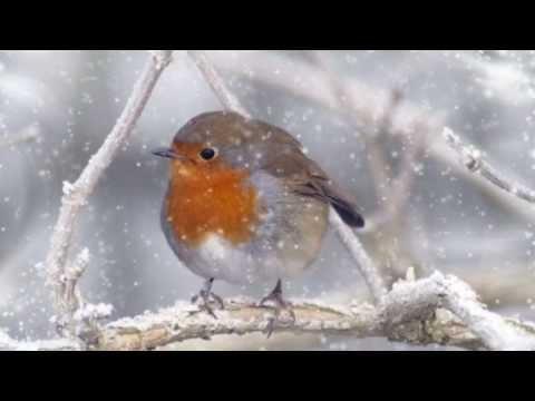 Winter Song - Kim Yoon / The Rain /