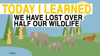 National Geographic: Losing Wildlife thumbnail