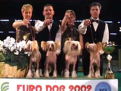 Euro Dog Show 2002 - Chinese Crested Dog - Breeders group