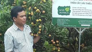 Farmer Interview - Lychees