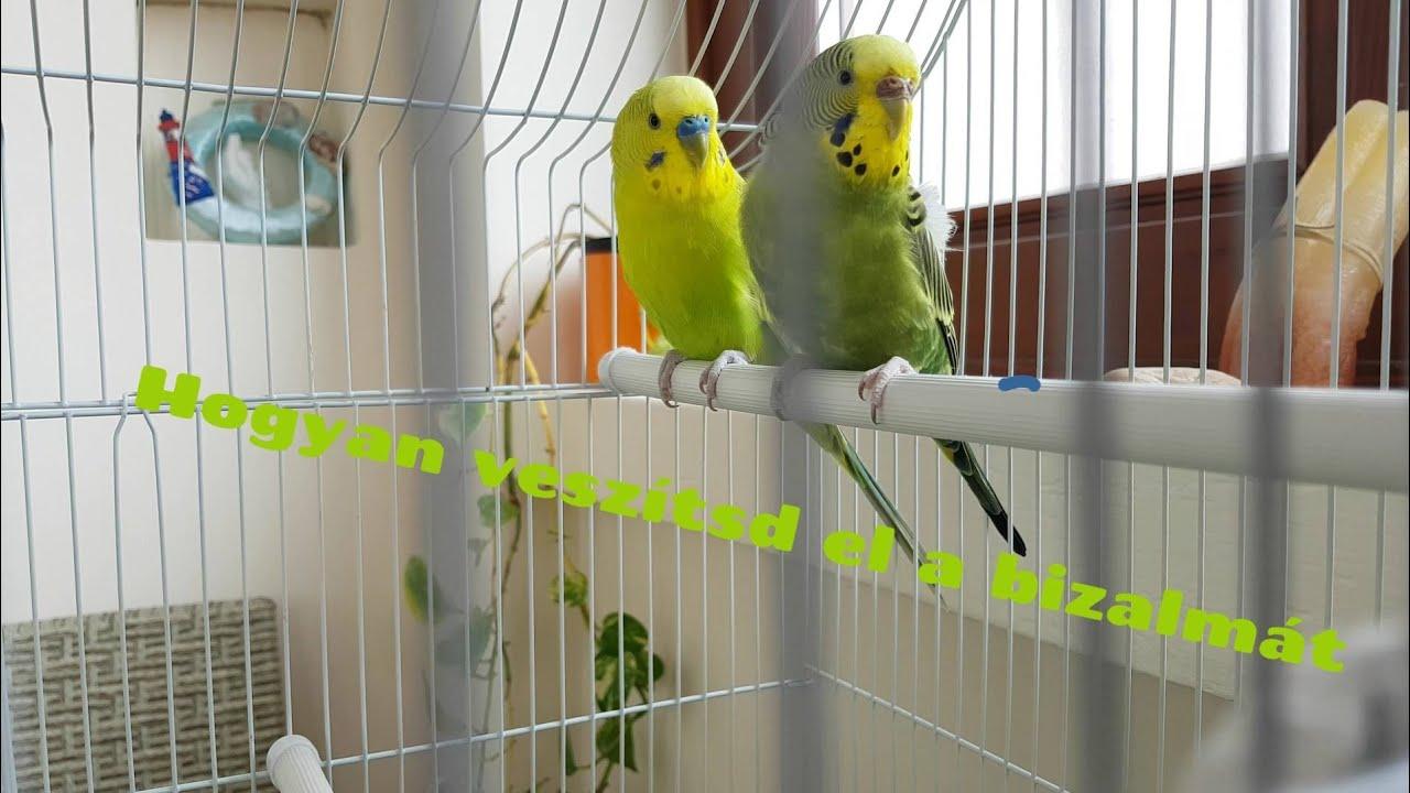 társkereső papagájok)