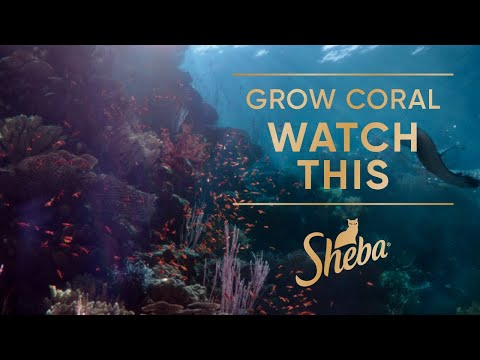 Help Restore Coral Reefs. Watch The Film That Grows Coral | Sheba Hope Reef