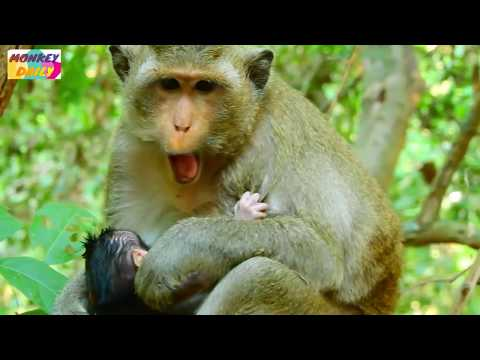 WoW! New baby newborn's face look like BUDDY baby Mom take care her baby very much Monkey Daily 661