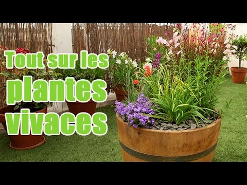 comment planter et entretenir des plantes vivaces pour balcon et terrasse youtube. Black Bedroom Furniture Sets. Home Design Ideas