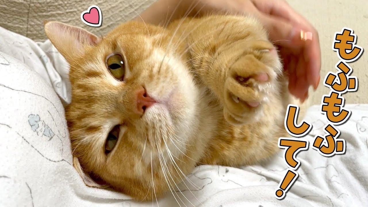 お風呂上がりに甘えん坊猫の隣に座るとこうなります!