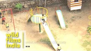 Playground with colourful slides and swings: The Shri Ram School, Delhi