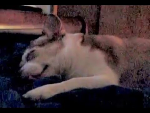 Dog Snoring Cartoon style
