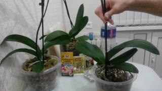 видео Обработка корней орхидеи