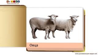 Учим названия животных   Домашние животные и птицы