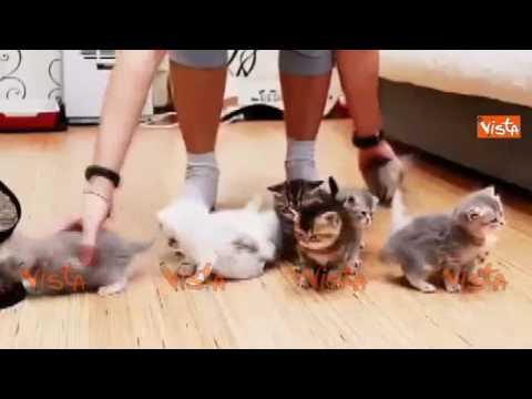Cerca di mettere in fila una cucciolata di gattini per una foto, l'effetto è irresistibile