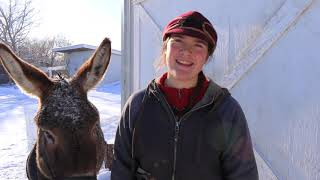 How to Feed Goats Square Bales//Donkey Pulling Sleigh