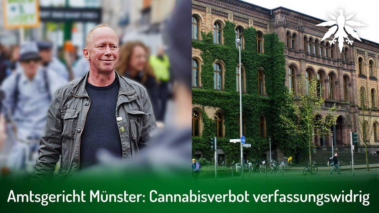Amtsgericht Münster: Cannabisverbot verfassungswidrig | DHV-News # 300