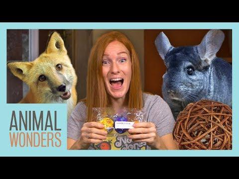 Unboxing Animal Toys!   Fox, Beaver, Toucan