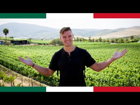 The Napa Valley Of Mexico...Welcome To Valle De Guadalupe! (Baja Ep. 2)