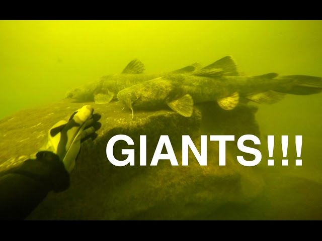 River Treasure: GIANT Catfish Edition!!! #1