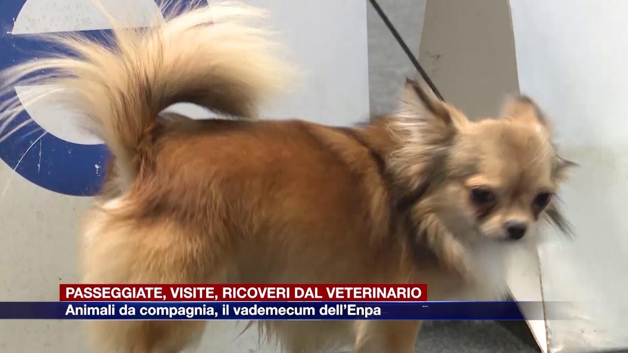Domande Al Veterinario Cane animali da compagnia: passeggiate, visite, ricoveri dal