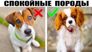 7 Малоактивных пород собак не требующих к себе большого внимания