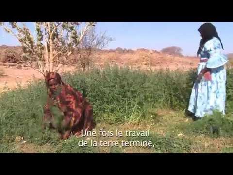 50 ans 50 femmes, Fatima Hadmi agricultrice à Tamanrasset, portrait N°34